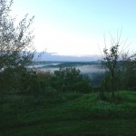 De ochtend gezien vanuit de tuin...