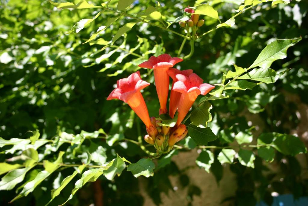 bloem 1